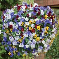 זרעי פרחים